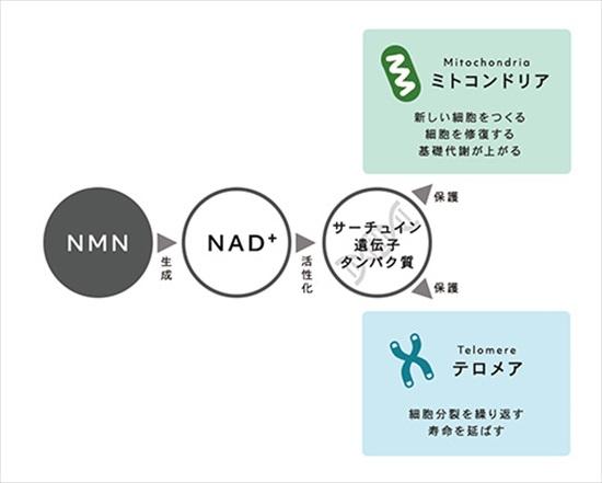 NMN_2_R