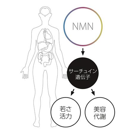 nmn-anti-aging-2